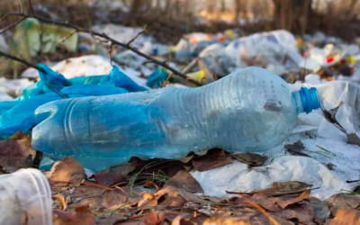 Bottled Up: A Parable in Plastic, by Anni Crofut Maliki